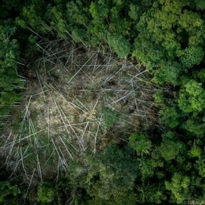Deforestación- Amazonía
