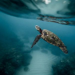 10 animals that you will only find in the Galapagos