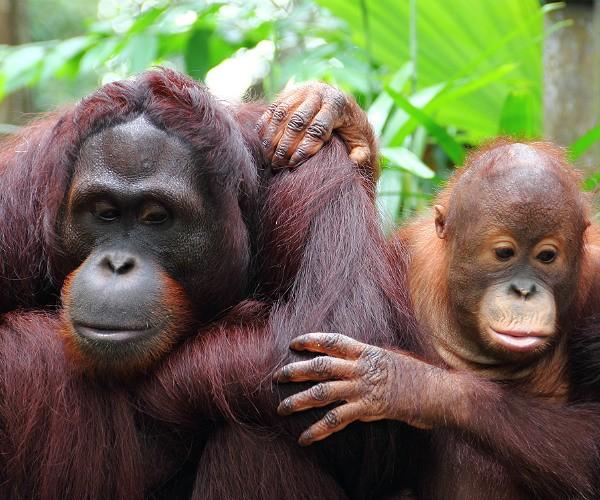 Luxury conservation Indonesia
