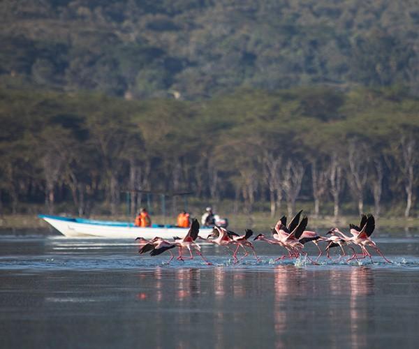 Boating near Flamingo, Loldia House