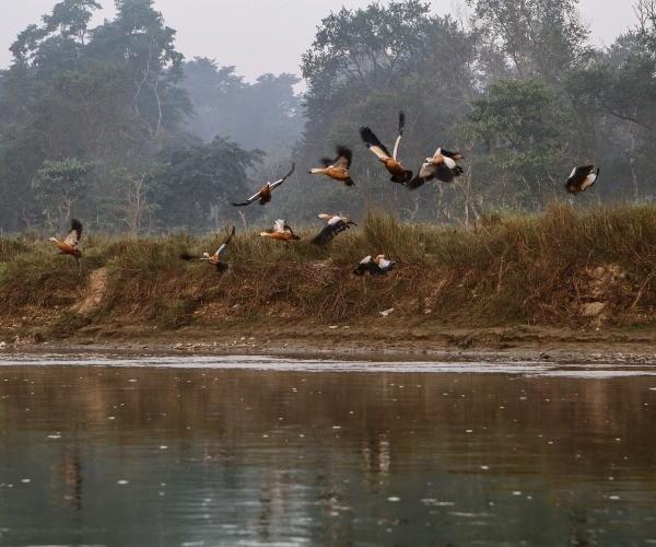 Birds Chitwan National Park River