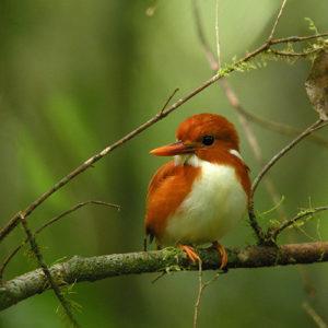 Madagascar - a birder's paradise