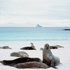 Top 10 activities in the Galapagos you can do by yourself after your cruise