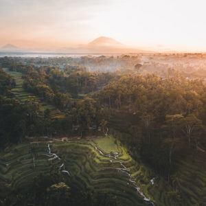 Photograph of the week: Tegallalang, Bali