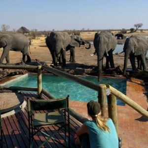 9 things to expect on a luxury safari