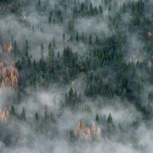 Photograph of the Week: Yosemite, Sierra Nevada Mountains, California