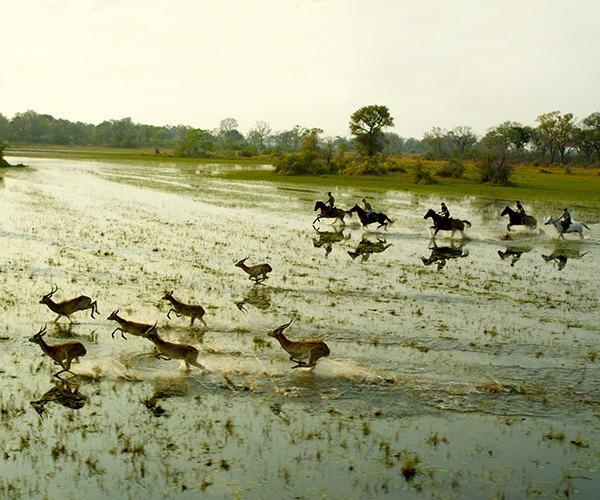 Riding across the Okavango Delta near red lechwe