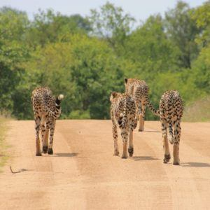 Kruger's wild, Wild North