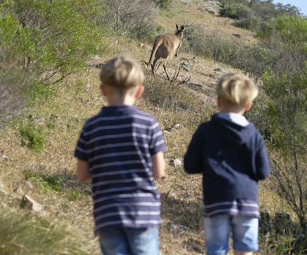 luxury volunteering australia
