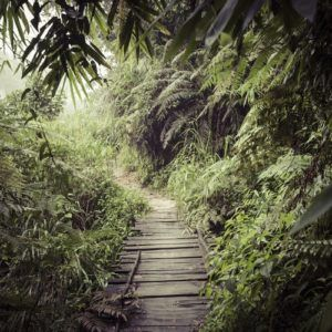 Top 5 rainforest holidays