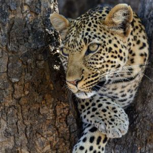 The best reasons to visit Ruaha