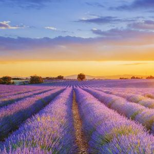 Health and wellbeing in Provence - looking to the future