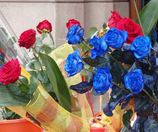 colourful roses barcelona