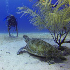Diver and sea turtle