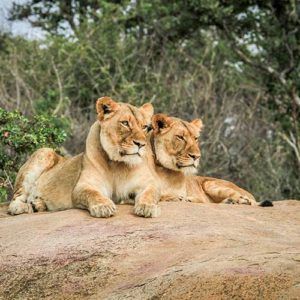 Future travel inspiration: the best safaris in Africa