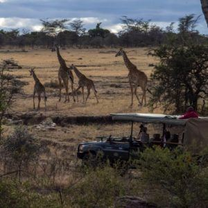 5 reasons to take a family safari after COVID-19