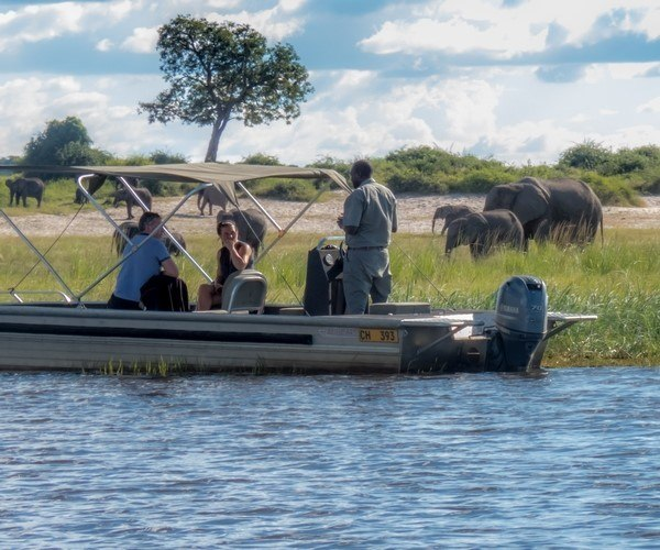 Boat based elephant viewing in Chobe