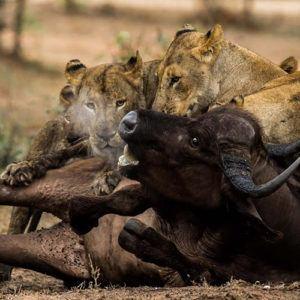 Wildlife documentaries you must watch in lockdown
