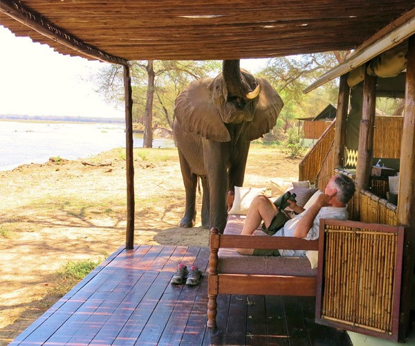 man-relaxing-veranda-elephant-close-up-old-mondoro-lodge-lower-zambezi
