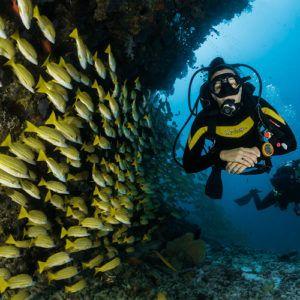COVID-19 coronavirus: Where in the world can you scuba dive?