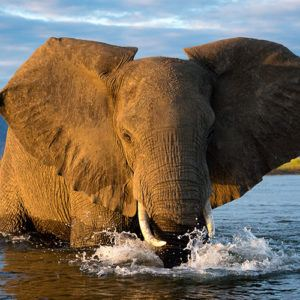 5 best parks in Africa to enjoy boating safaris