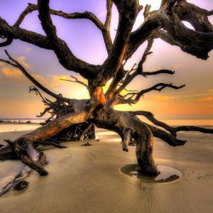 Photograph of the week: Driftwood Beach, Jekyll Island, Georgia, USA