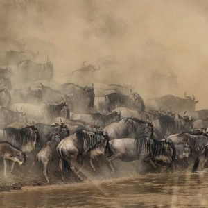 12 terrific truths about The Great Wildebeest Migration