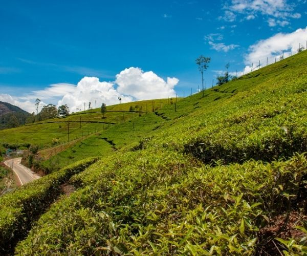South India Tours_Ooty