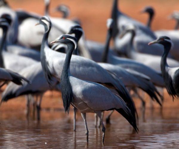 Khichan Bird Sanctuary