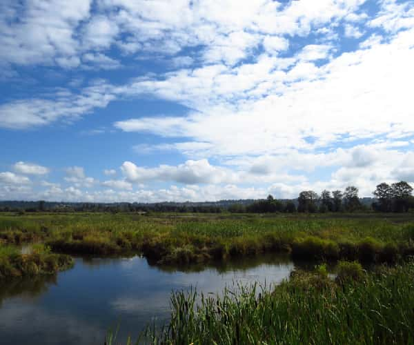 Lincolnshire Fens - Quality Unearthed