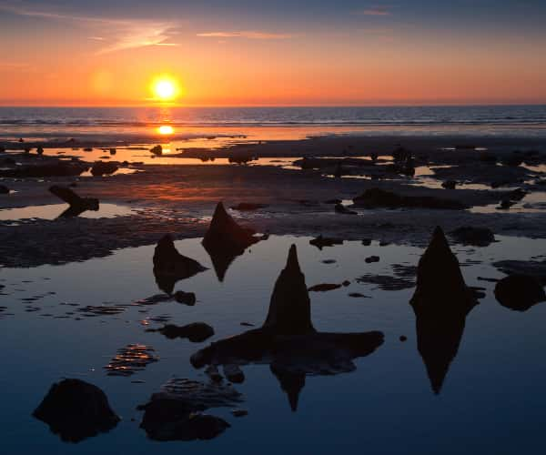 The Sunken Forest at Borth