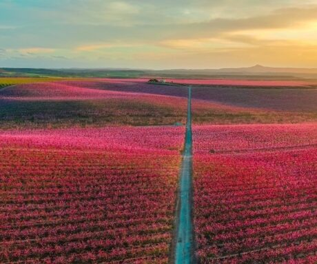 5 best ways to spend spring in Spain