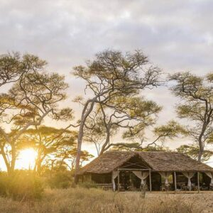 Why you must visit Tarangire National Park
