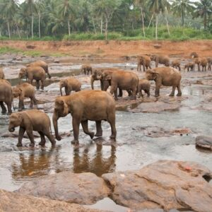Top 7 places to see in Sri Lanka