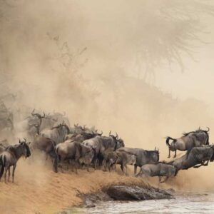 The Great Migration, Tanzania