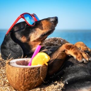 Best beaches for your dog in Tuscany
