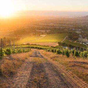 South Africa's first varietal-based wine route