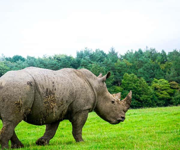 The incredible wildlife of Knowsley Safari