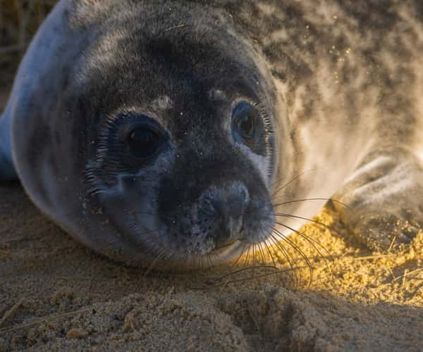 A seal found on Great Yarmouth