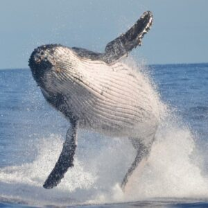 South American whale watching: 6 astounding sites