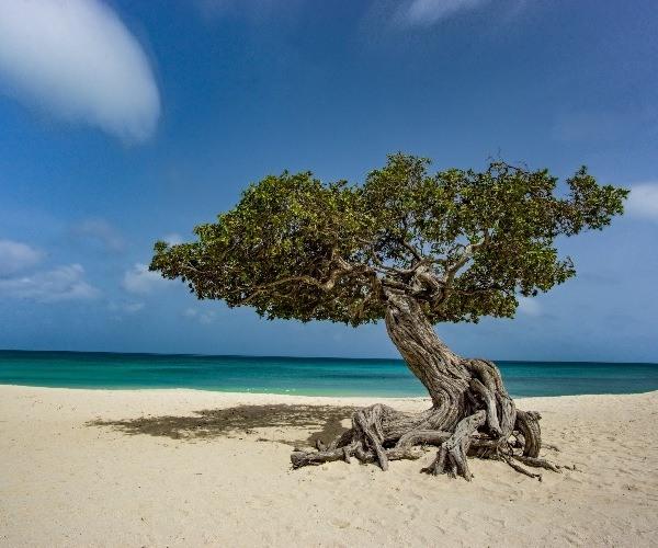 Guilt-free green luxury in Aruba