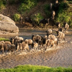 Where and when to witness the Great Wildebeest Migration